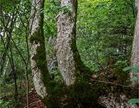 sentieri nel bosco (II)
