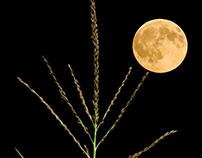 "August Full ""Green Corn"" Moon"