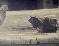 Sepia photograph