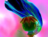 Flowerzz