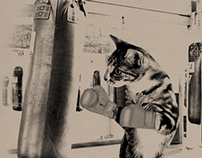 Photoshop Fun - boxing cat