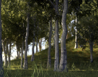 FOREST CG TEST