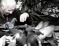 pigeon ~ peace ~ dove