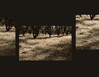 Seven Glances: Mesilla. Orchard.