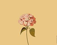 花落 blossom fall
