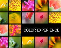 Color Experience