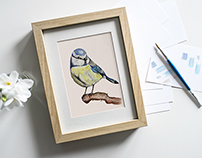 Birds with Colored Pencils