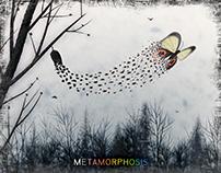 METAMORPHOSIS – Editorial Design
