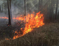 Tips on How to Prepare and Evacuate for a Brush Fire