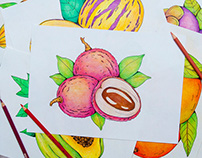 Drawings of exotic fruits