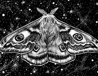Moth No. 1