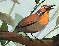 BIRDS OF BRAZIL — Part 1