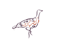 Houbara Center for Avian Research Logo