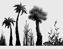 Tropical island environment