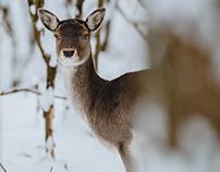 Animals in winter forest #1