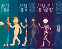 Anatomía Humana - infografía