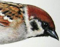 Ornitology