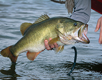 Bass Fishing Tip - Match the Hatch