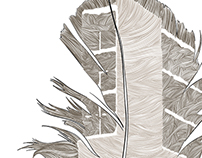 Commencement Program: Feather Illustration