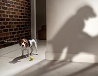 The Dog Whisperer with Cesar Millan