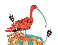 arrow ibis