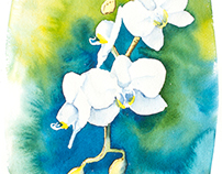 White Orchid Watercolor with Gold Leaf