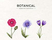 Botanical - Watercolor illustrations