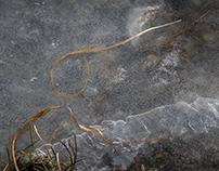 ghiaccio ed erba