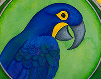 Hyacinth Macaw | Rainbow Menagerie