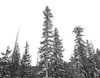 El Niño in the White Mountains