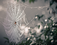 Nature Photography: Spiderwebs