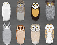 Owl Illustration Set