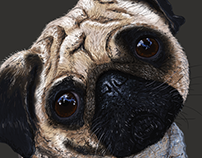 Digital Painting - Pug