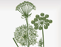 lifestyle products in fennel plant print