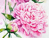 Peonies. Pink series.