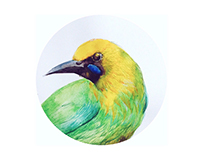 鳥/bird