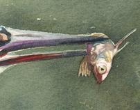 Aquarelas