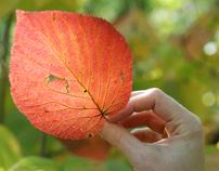 Fall 07