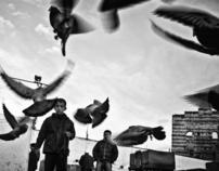 İstanbul Bird Bazaar