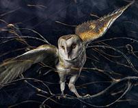 Barn Owl Jack