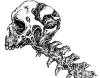 Mutt - Hybrid skull.