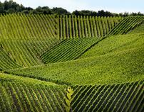 Vins & Crémants de Luxembourg
