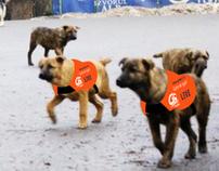 Guerrilla advertising - Dog Racing