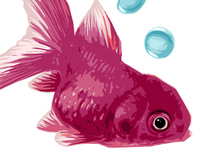 Maroon Goldfish