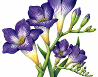 Spring Flower Illustrations from the Past 25 Years