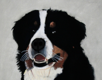 Bernese Mountain Dog - Max