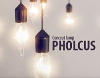 Pholcus