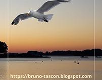 Bruno Tascon : l'oiseau des mers MORBIHAN BRETAGNE