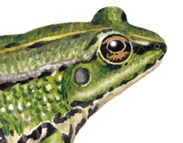 Guide to the Amphibians and Reptiles of Galicia