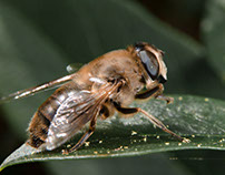 Macro Bugs 2